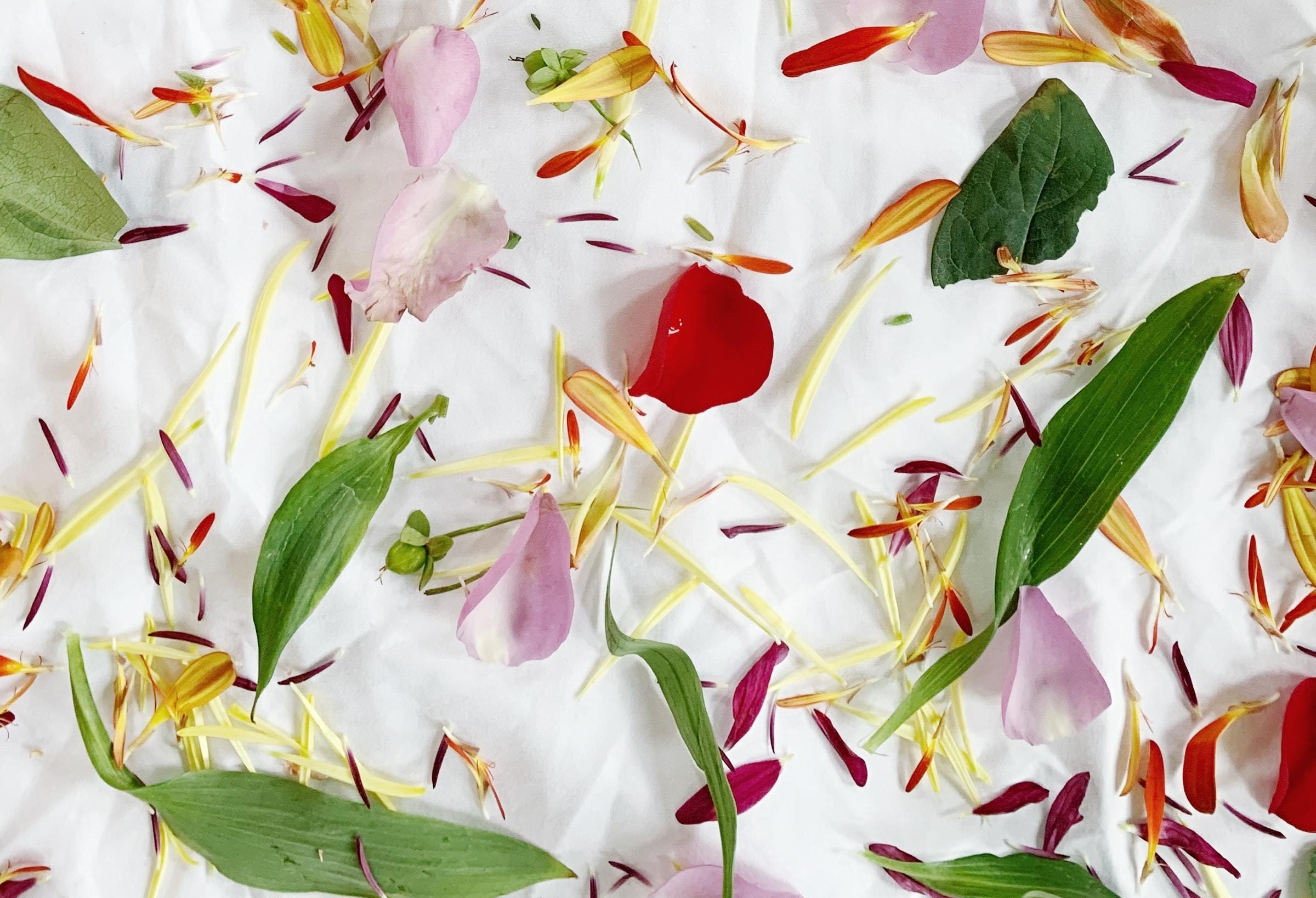 An assortment of colourful florals and leaves lie scattered across a white sheet